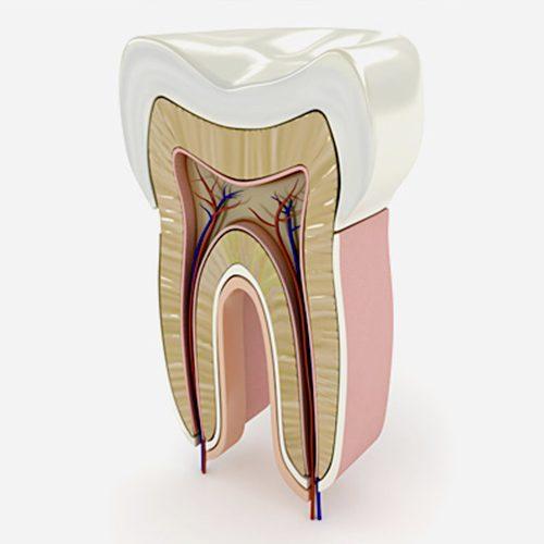 Endodonzia - Studio dentistico Setaro ad Alessandria